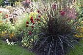 Late summer bed with Pennisetum setaceum 'Rubrum'
