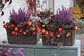 Basket boxes planted in autumn-Erica gracilis Beauty Queen 'Letizia'