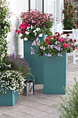 Large plastic pots planted as privacy screen