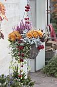 Hanging basket with Chrysanthemum, Cineraria maritima