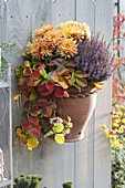 Terracotta wall pot with strawberry, Calluna Garden Girls