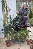 Wooden barrel with vegetables, woman harvesting kale 'Nero di Tuscany'