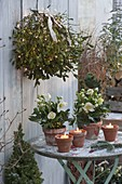 Mistletoe shrub with fairy lights