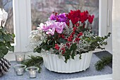 White bowl with Cyclamen (cyclamen) and Calocephalus