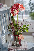 Amaryllis grown in glass with pebbles