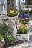 Tulipa 'Curly Sue' 'Lilac Perfection' 'Yellow Star', Primula veris
