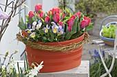 Orange plastic tub planted with Viola cornuta 'Etain'