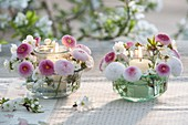 Small lanterns with Bellis Tasso and Prunus flowers