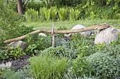 Long weathered branch of an elder as a garden sculpture