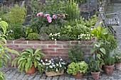 Masonry raised bed with herbs