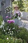 Frau schneidet Paeonia lactiflora (Pfingstrosen) für einen ueppigen Strauss