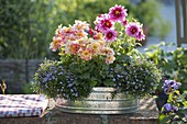 Zinc jardiniere with Dahlia Dreamy 'Fantasy' 'Nights'