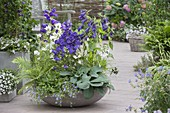 Bowl with different bluebells, Campula glomeata 'Alba'