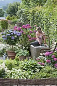 Partial shade terrace with hydrangeas and fountain