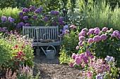 Shady seat in the hydrangea garden