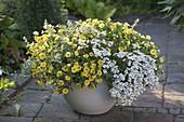 White-yellow planted tub Calibrachoa Superbells 'Lemon Slice'