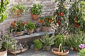 Peppers, hot peppers, chili on wooden bench, Petroselinum