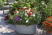 Planting old zinc tub with summer flowers