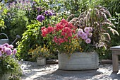 Old zinc pan planted with perennials, summer flowers and grass