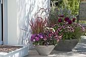 Spaetsommerlich bepflanzte Schalen am Hauseingang