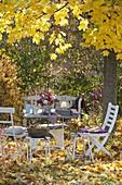 Gedeckter Tisch unter Ahornbaum mit goldgelben Blättern