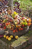 Autumn basket filled with apples, decorated with Acer leaves