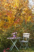 Small seat with asters bouquet in front of ironwood tree and ornamental apples
