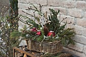 Christmas basket box with different conifer branches