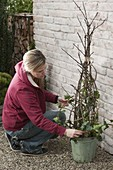Building birdseed tree from branches yourself