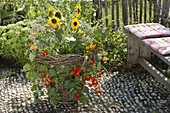 Woman planting summer flowers in homemade wicker basket