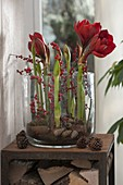 Large glass filled with Hippeastrum decorated with branches