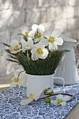 Small winter Helleborus niger bouquet with pine needles