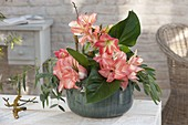 Hippeastrum 'Zombie' salmon-pink, 'Baby Star' red-white