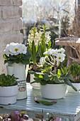 Primula acaulis, Hyacinthus 'White Pearl' and corn salad