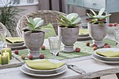 Table decoration with Kalanchoe thyrsiflora (desert cabbage)