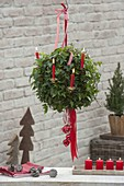 Hedera helix gorwn as a ball in a hanging basket, decorated for Christmas