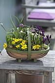 Woodchip basket with Eranthis hyemalis, Fritillaria meleagris