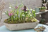 Wooden bowl with Galanthus nivalis, Hyacinthus