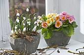 Galanthus nivalis (Snowdrop) and Primula acaulis (Primrose)