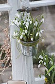 Galanthus nivalis in zinc pot hung on window handle