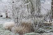 Frozen fennel (foeniculum) between grasses