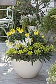 Yellow-white spring bowls