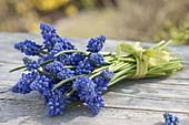 Muscari armeniacum (Grape Hyacinth), posy on wooden table