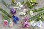 Ingredients for bouquet in spring-bag muscari, Bellis