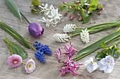 Ingredients for bouquet in spring-bag muscari, Bellis