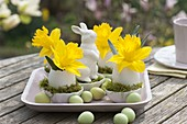Narcissus flowers in eggs as vase, bowl with moss