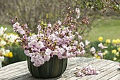 Bouquet made of Prunus sargentii 'Accolade' (Early ornamental cherry)
