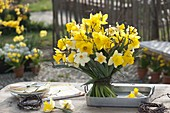 Woman ties a bouquet of narcissus