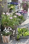 Spring terrace, Ranunculus, Anemone