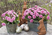 Primula 'Romance' with Easter bunnies and Easter eggs